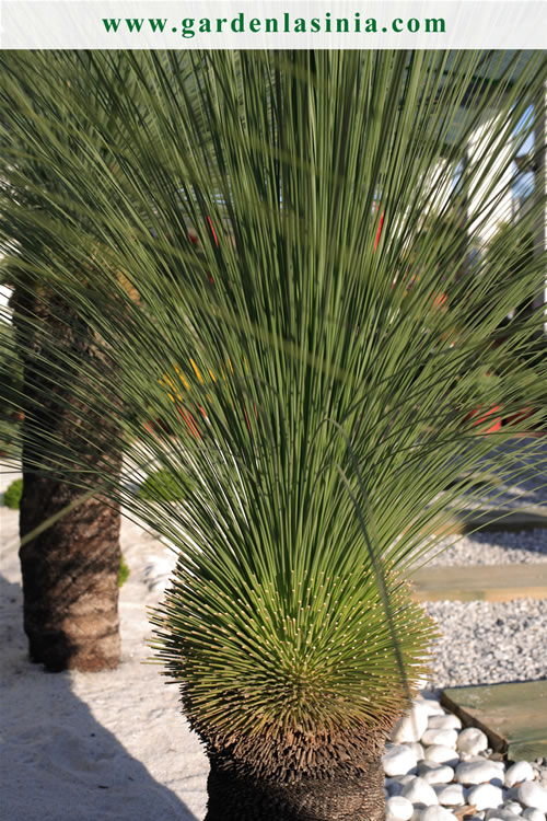 Plantas de exterior productos y servicios la s nia for Plantas de invierno exterior