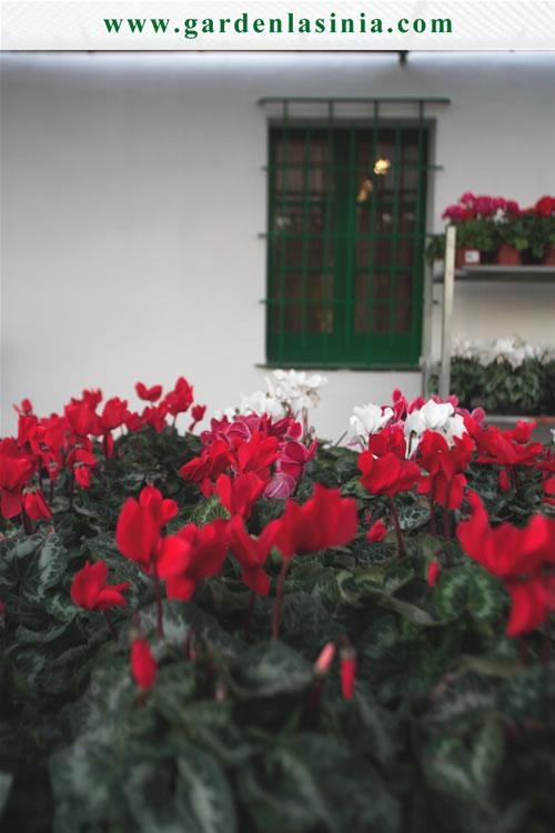 Plantas de exterior productos y servicios la s nia - Plantas de exterior resistentes todo el ano ...