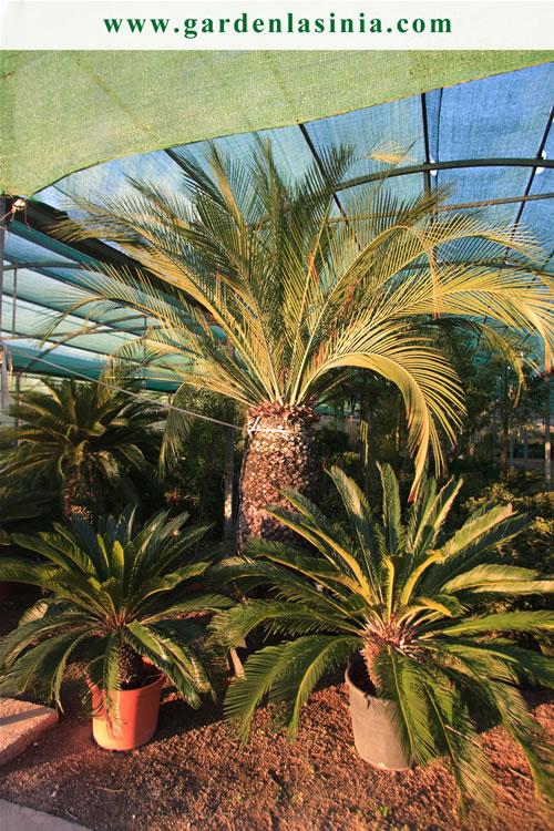Plantas de exterior productos y servicios la s nia garden center - Plantas para jardin exterior ...