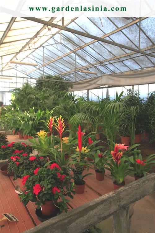 Plantas de interior productos y servicios la s nia for Plantas de interior exoticas