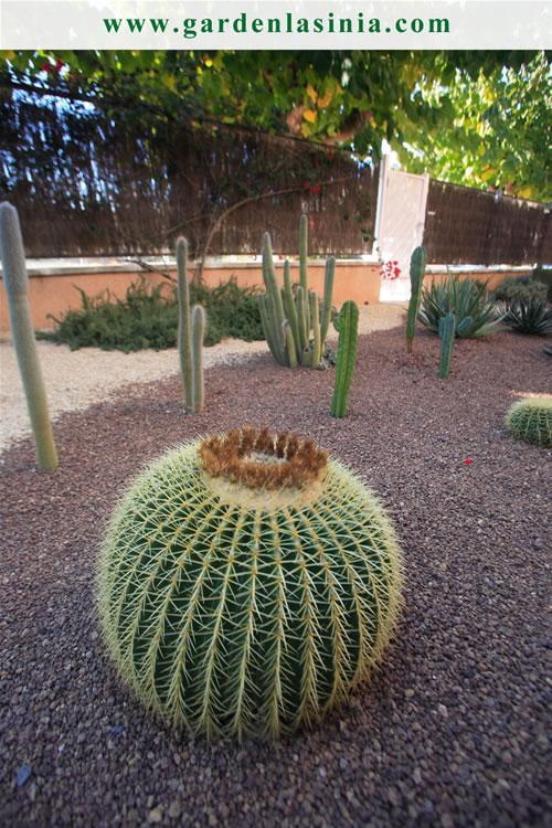 Plantas de exterior productos y servicios la s nia for Plantas exterior